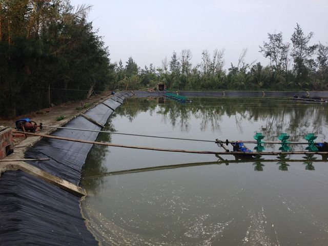 Bạt Lót Hồ Chứa Nước Nuôi Tôm, Nuôi Cá, Bạt Nhựa HDPE Lót Ao Chống Thấm Phú Yên