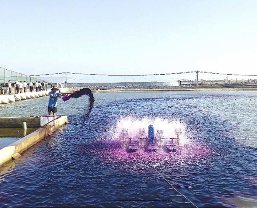 Bạt Lót Hồ Chứa Nước Nuôi Tôm, Nuôi Cá, Bạt Nhựa HDPE Lót Ao Chống Thấm Quảng Bình